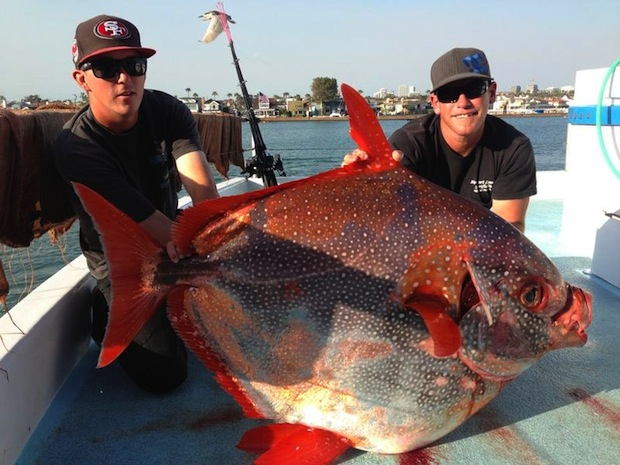 Southern california fishermen hook giant opah clearwater for Giant fish hook